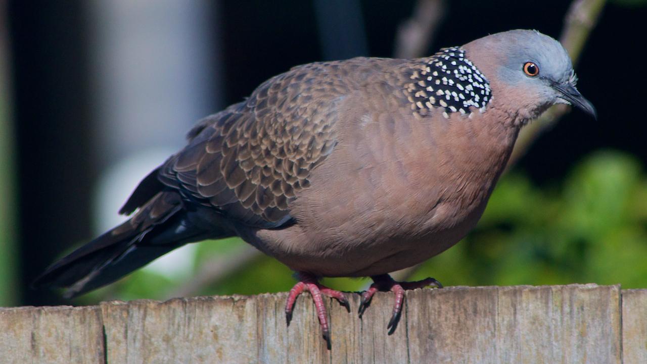 Australian Suburban Wildlife